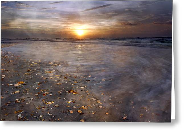 Spotted Shells Greeting Cards - Seashell Sunrise Greeting Card by Betsy A  Cutler