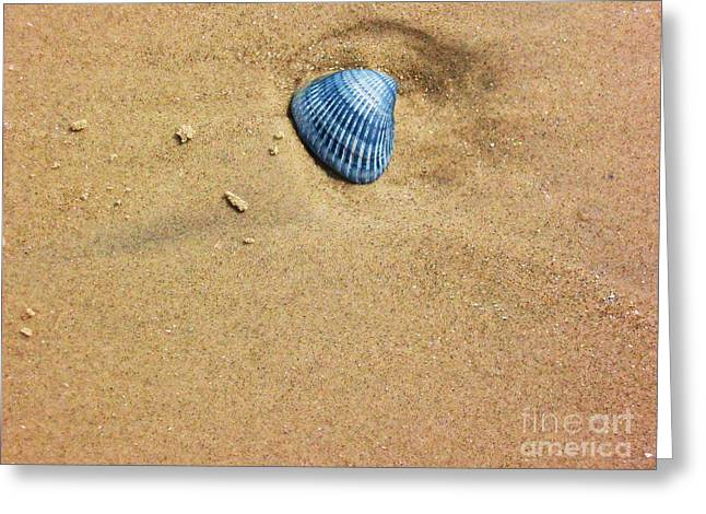 Seashell Picture Photographs Greeting Cards - Seashell Greeting Card by Venus