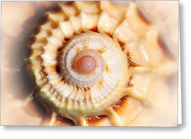 Kaye Menner Shells Greeting Cards - Seashell Wall Art 11 - Spiral of Harpa Ventricosa Greeting Card by Kaye Menner