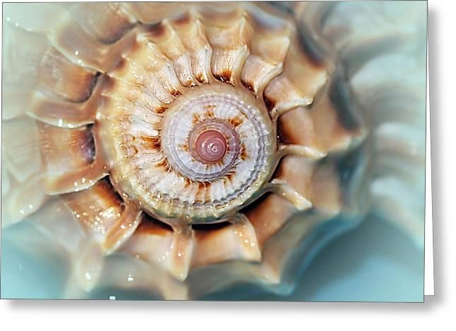Seashell Wall Art 13 - Spiral Of Harpa Ventricosa Greeting Card by Kaye Menner