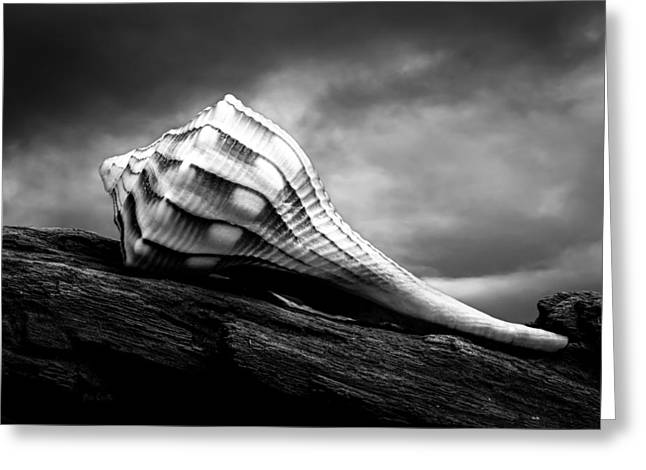 Seashell Without The Sea Greeting Card by Bob Orsillo