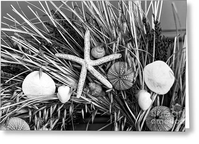 Starfish Posters Greeting Cards - Seashell Wreath mono Greeting Card by John Rizzuto