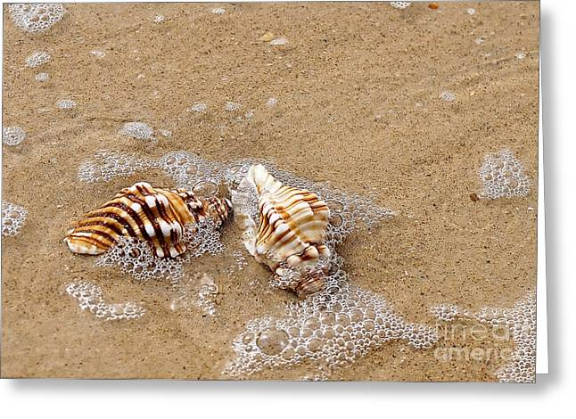 Kaye Menner Shells Greeting Cards - Seashells and Bubbles 2 Greeting Card by Kaye Menner