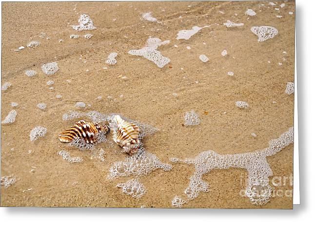 Kaye Menner Shells Greeting Cards - Seashells and Bubbles Greeting Card by Kaye Menner