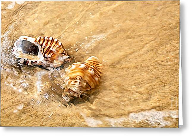 Ripples In Water Greeting Cards - Seashells and Ripples Greeting Card by Kaye Menner