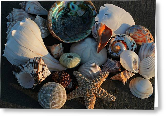 Starfish Posters Greeting Cards - Seashells at Sunset I Greeting Card by Suzanne Gaff