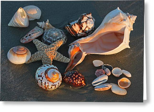 Starfish Posters Greeting Cards - Seashells at Sunset II Greeting Card by Suzanne Gaff