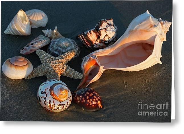 Sea Shell Art Greeting Cards - Seashells at Sunset Greeting Card by Suzanne Gaff