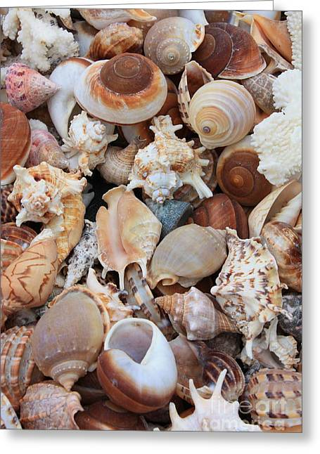 White Shark Greeting Cards - Seashells Greeting Card by Carol Groenen