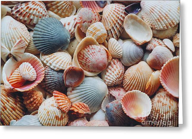 Shell Pattern Greeting Cards - Seashells Greeting Card by David N. Davis