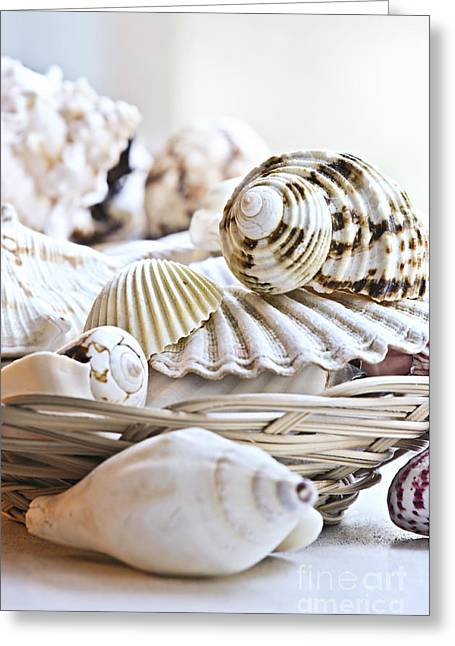 Mollusk Greeting Cards - Seashells Greeting Card by Elena Elisseeva
