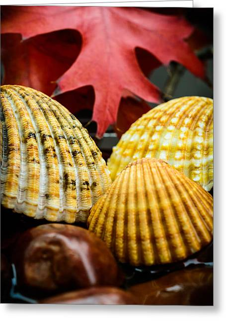 Seashells II Greeting Card by Marco Oliveira