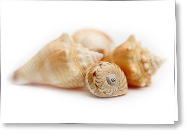Beachcombing Greeting Cards - Seashells Macro  Greeting Card by Jennie Marie Schell