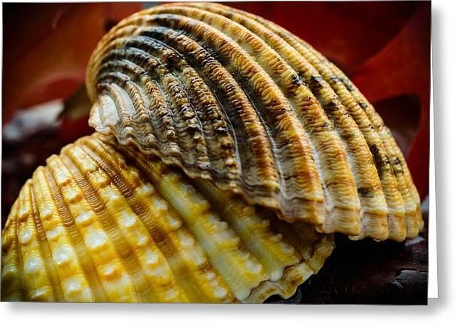 Seashells Greeting Card by Marco Oliveira