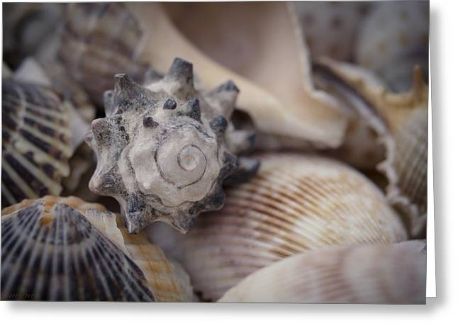 Shell Collection Digital Art Greeting Cards - Seashells Greeting Card by Maria Angelica Maira