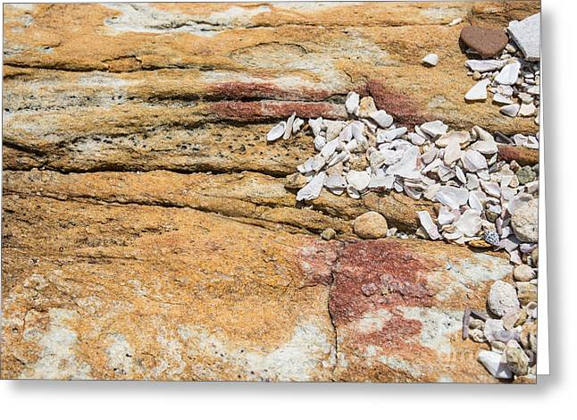 Southern Province Greeting Cards - Seashells on rock Greeting Card by Christina Rahm