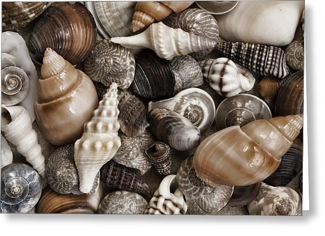 Seashells On The Beach Greeting Card by Carol Leigh
