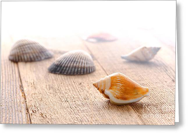 Diffused Greeting Cards - Seashells on Wood Dock Greeting Card by Olivier Le Queinec