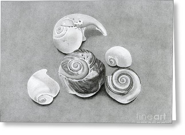 Seashell Drawings Greeting Cards - Seashells Greeting Card by Sarah Batalka