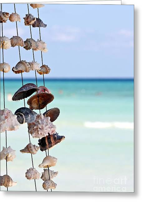 Tropical Scene Greeting Cards - Seashells Greeting Card by Sophie Vigneault