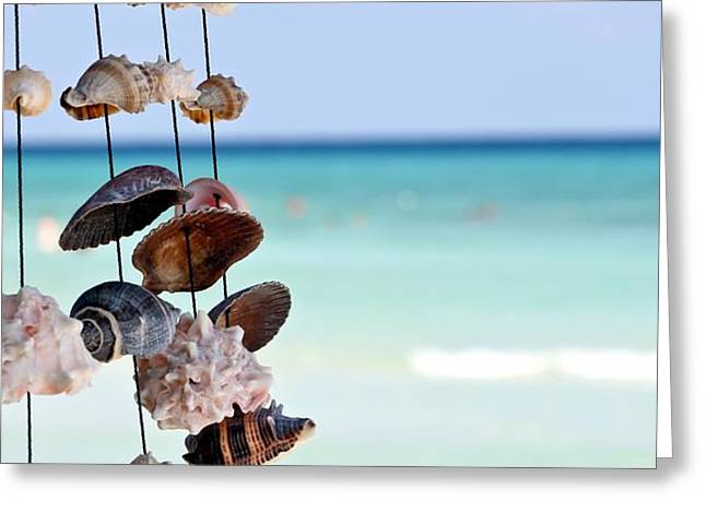 Seashells Greeting Card by Sophie Vigneault
