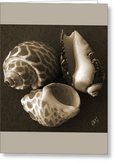 Seashells Spectacular No 1 Greeting Card by Ben and Raisa Gertsberg