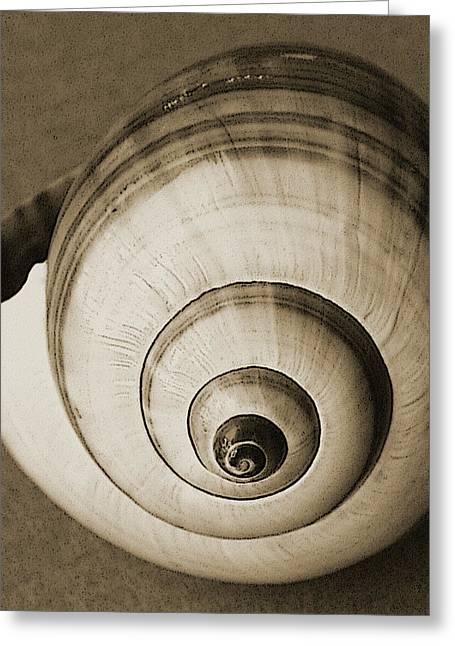 Sea Shell Digital Art Photographs Greeting Cards - Seashells Spectacular No 25 Greeting Card by Ben and Raisa Gertsberg