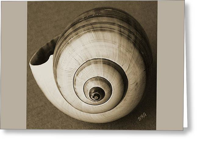 Ben Gertsberg Greeting Cards - Seashells Spectacular No 25 Greeting Card by Ben and Raisa Gertsberg