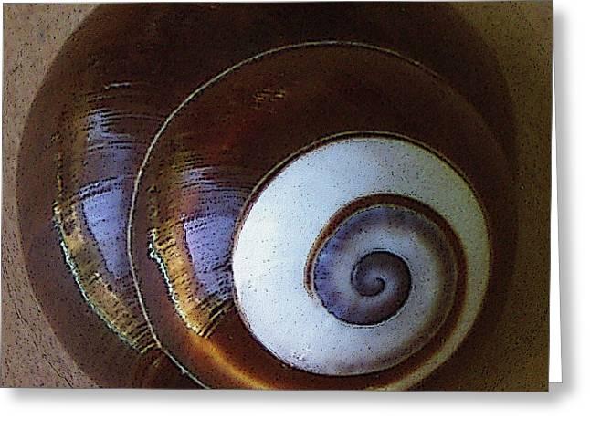 Sea Shell Digital Art Photographs Greeting Cards - Seashells Spectacular No 26 Greeting Card by Ben and Raisa Gertsberg