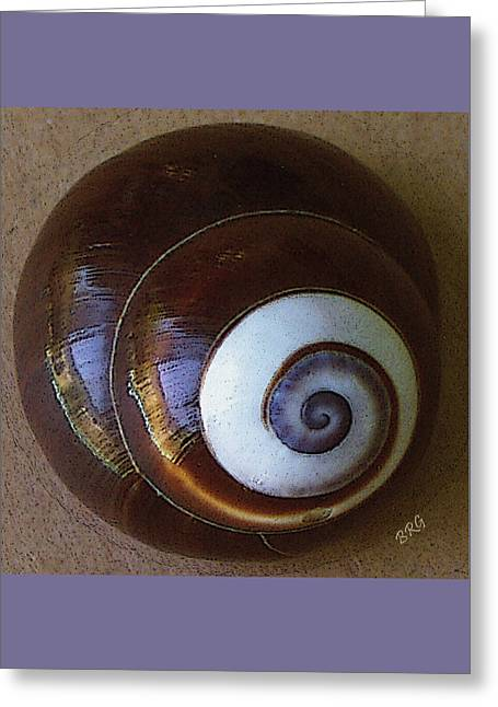 Seashells Spectacular No 26 Greeting Card by Ben and Raisa Gertsberg