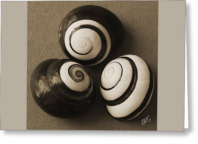 Seashell Fine Art Greeting Cards - Seashells Spectacular No 28 Greeting Card by Ben and Raisa Gertsberg