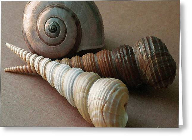 Marine Mollusc Greeting Cards - Seashells Spectacular No 29  Greeting Card by Ben and Raisa Gertsberg