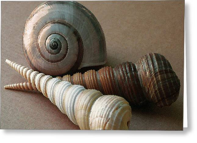 Ocean Art. Beach Decor Greeting Cards - Seashells Spectacular No 29  Greeting Card by Ben and Raisa Gertsberg