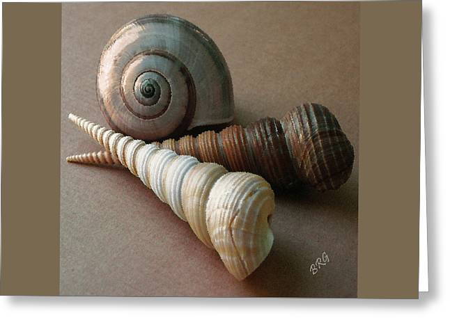 Shell Texture Greeting Cards - Seashells Spectacular No 29  Greeting Card by Ben and Raisa Gertsberg