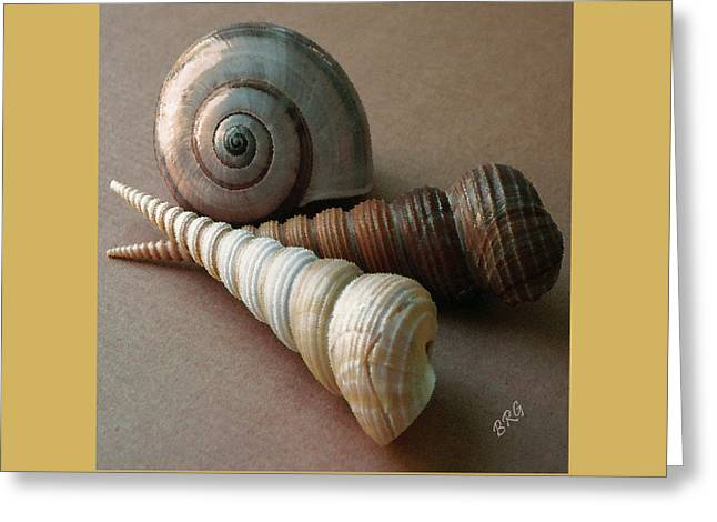 Seashell Fine Art Greeting Cards - Seashells Spectacular No 29  Greeting Card by Ben and Raisa Gertsberg
