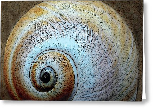 Patterned Greeting Cards - Seashells Spectacular No 36 Greeting Card by Ben and Raisa Gertsberg