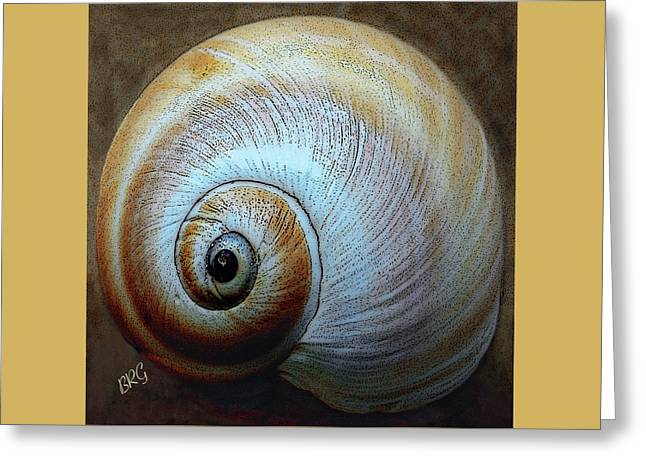Spirals Greeting Cards - Seashells Spectacular No 36 Greeting Card by Ben and Raisa Gertsberg
