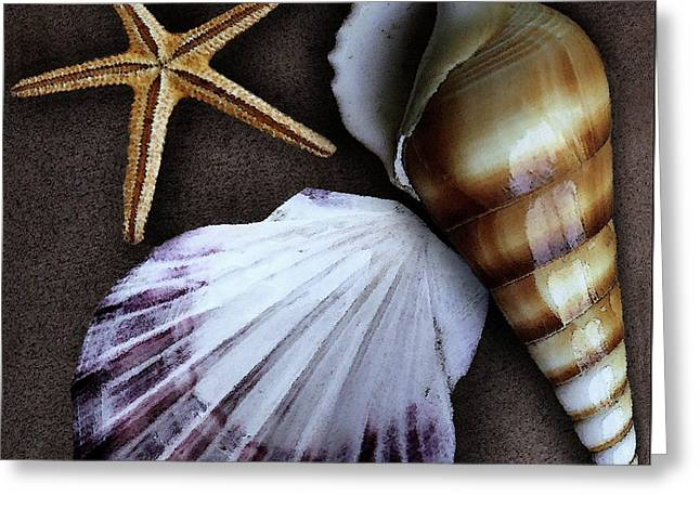 Shell Texture Greeting Cards - Seashells Spectacular No 37 Greeting Card by Ben and Raisa Gertsberg