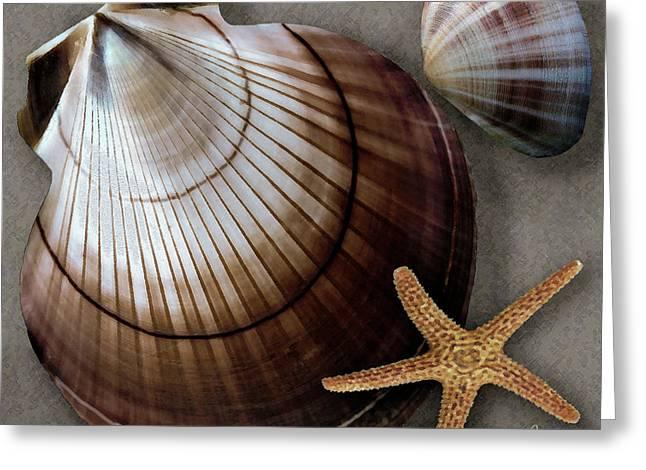 Ben Gertsberg Greeting Cards - Seashells Spectacular No 38 Greeting Card by Ben and Raisa Gertsberg