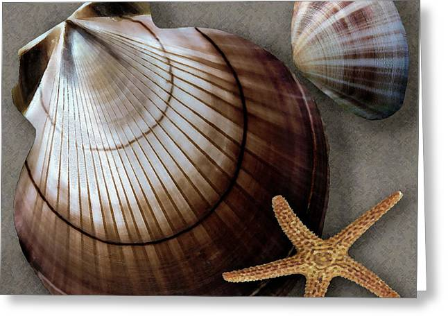 Shell Texture Greeting Cards - Seashells Spectacular No 38 Greeting Card by Ben and Raisa Gertsberg