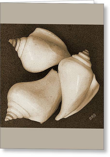 Seashells Spectacular No 4 Greeting Card by Ben and Raisa Gertsberg