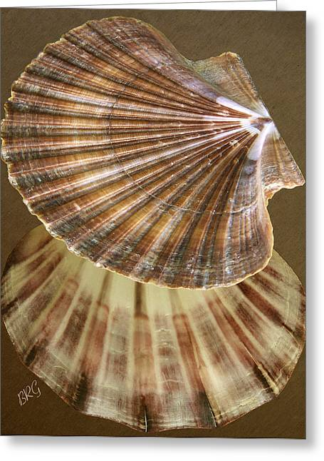Sea Shell Digital Art Photographs Greeting Cards - Seashells Spectacular No 54 Greeting Card by Ben and Raisa Gertsberg