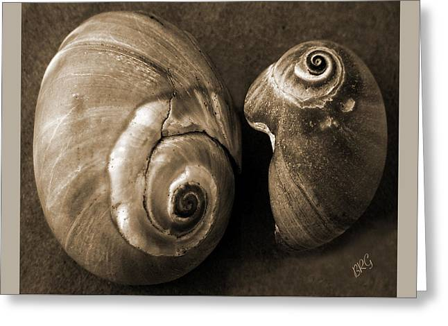 Seashells Spectacular No 6 Greeting Card by Ben and Raisa Gertsberg