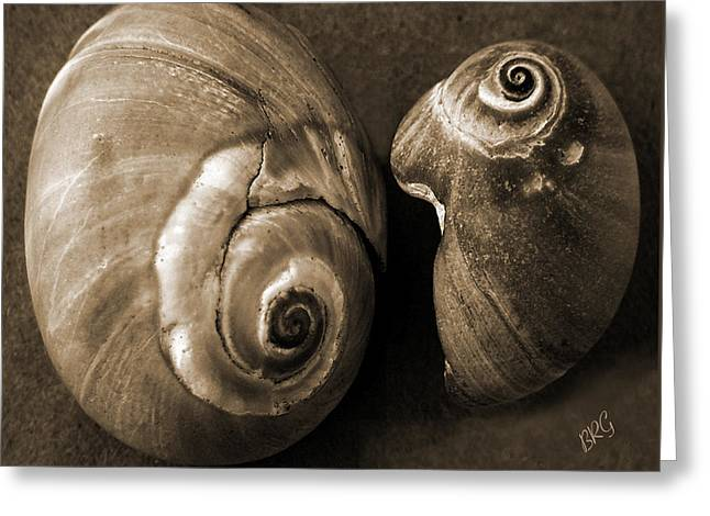 Shell Texture Greeting Cards - Seashells Spectacular No 6 Greeting Card by Ben and Raisa Gertsberg