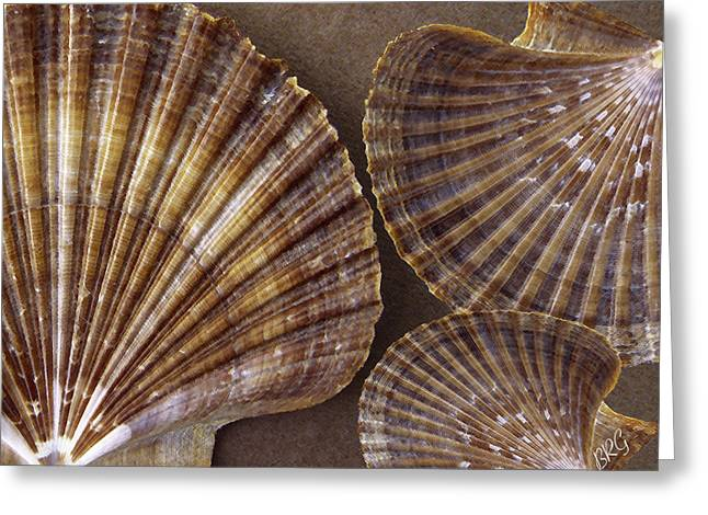 Sea Shell Digital Art Photographs Greeting Cards - Seashells Spectacular No 7 Greeting Card by Ben and Raisa Gertsberg