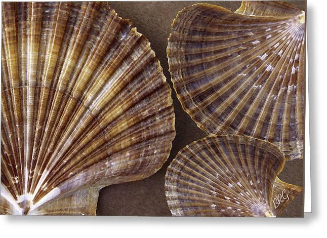 Sea Shell Digital Art Greeting Cards - Seashells Spectacular No 7 Greeting Card by Ben and Raisa Gertsberg