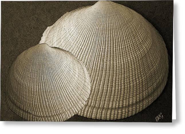 Sea Shell Digital Art Photographs Greeting Cards - Seashells Spectacular No 8 Greeting Card by Ben and Raisa Gertsberg