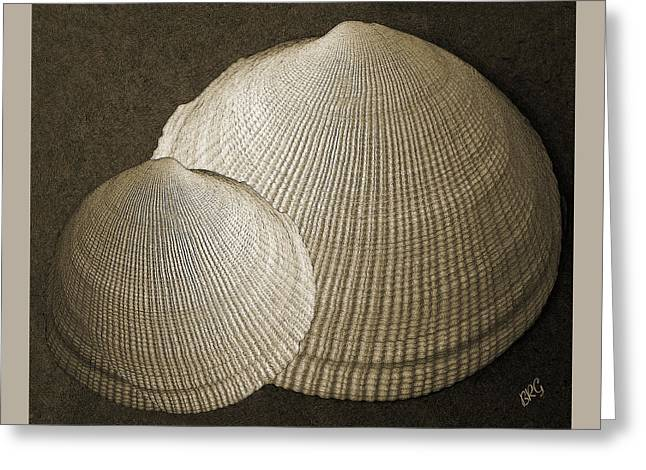 Shell Texture Greeting Cards - Seashells Spectacular No 8 Greeting Card by Ben and Raisa Gertsberg