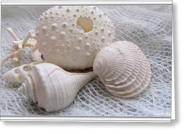 White Cloth Greeting Cards - Seashells Study 1 Greeting Card by Danielle  Parent