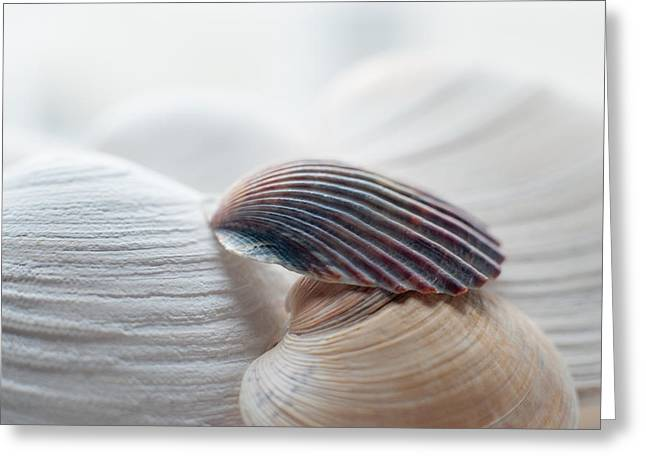 Isolated Object Greeting Cards - Seashells Greeting Card by Terry DeLuco